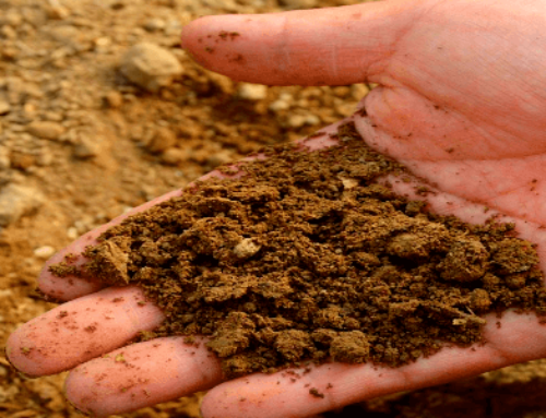 Why Soil Testing Isn't as Boring as it Sounds