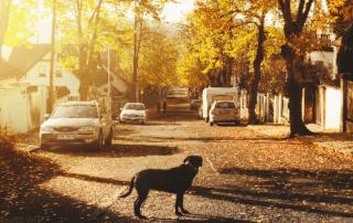 dog in suburban street